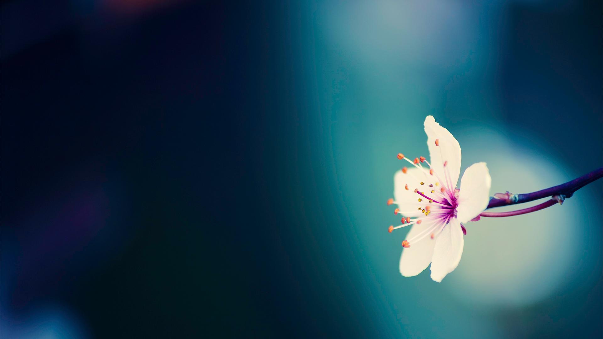 spring-flower-background